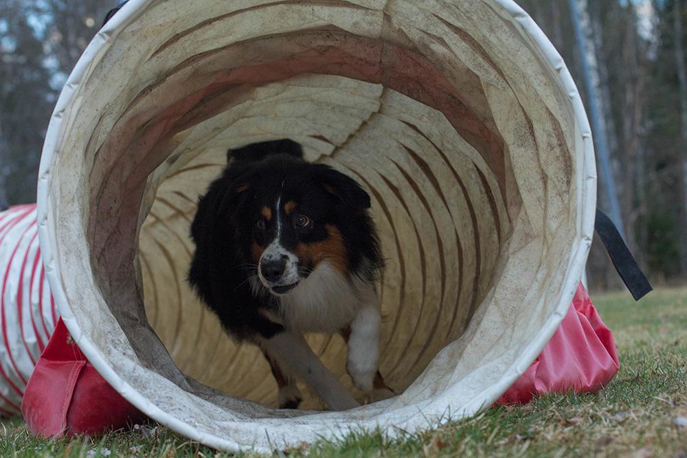 Alf i tunneln